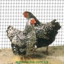 Сетка для птиц Украина черная 1м*100м
